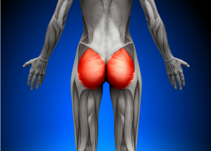 highlighted anatomy of the female glute muscles when doing glute squeezes