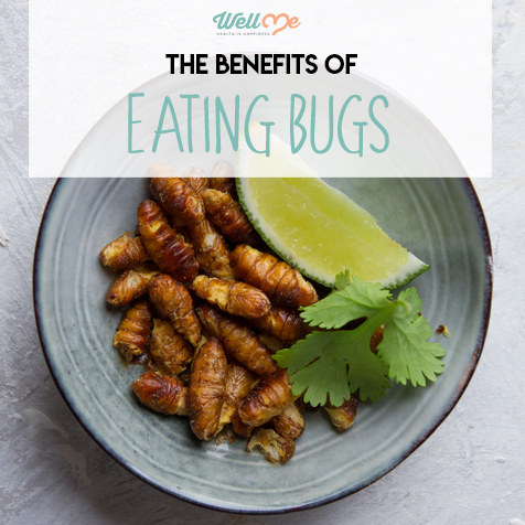 the benefits of eating bugs