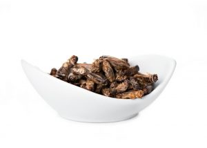 a bowl of fried crickets on a white background