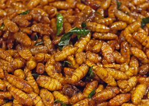 fried silkworms filling the picture