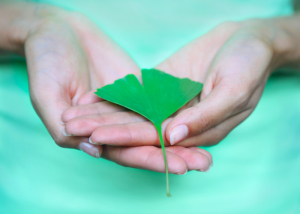 woman in a green tshirt holding a ginkgo biloba leaf in her hands