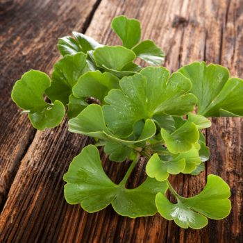 A bunch of ginkgo biloba leaves on a wooden table