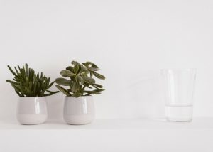 small house plants with a glass of water on white background