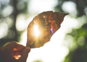 a person holding up a leaf with UV sun rays shining through it
