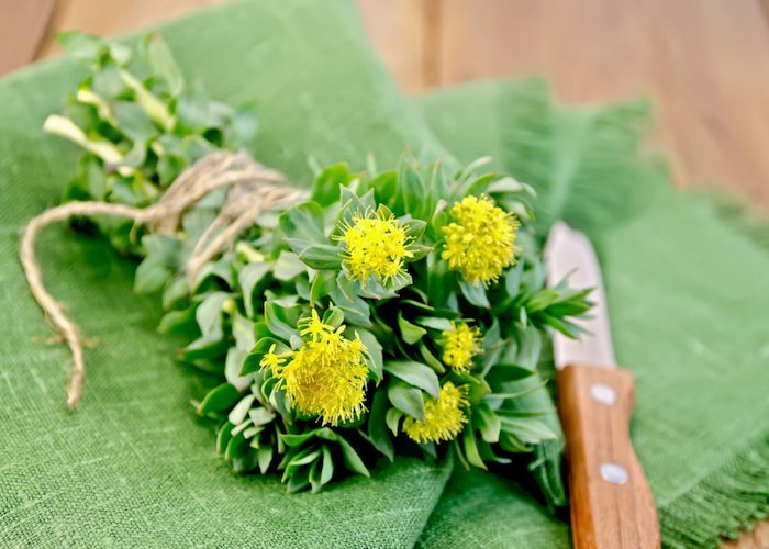 a bunch of Rhodiola rosea tied with string and laid on a green cloth