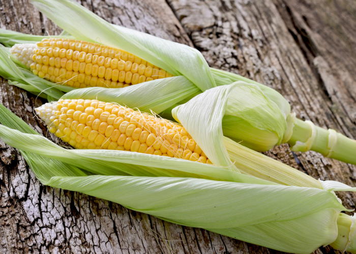 two fresh corn cobs on a wooden table