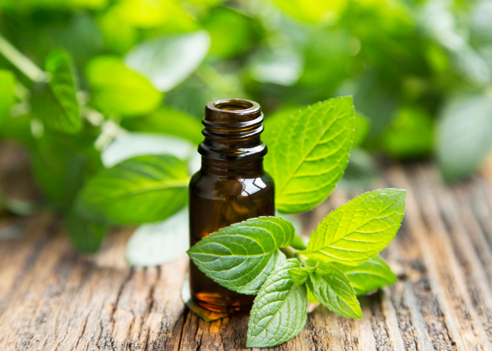 a small bottle of peppermint oil with fresh mint around it