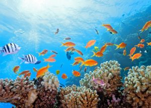 underwater shot of a coral reef and colorful fishes
