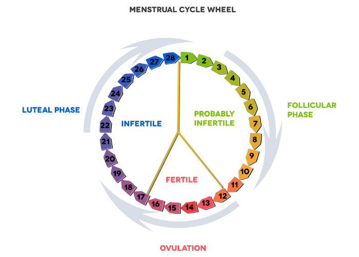 Diagram of a menstrual cycle wheel used in the rhythm birth control method, otherwise known as the family awareness method (FAM)