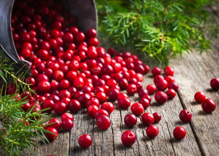 A metal pail laid sideways with cranberries, one of the strongest natural antibiotics, spilling out of it onto a wooden table