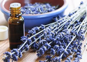 A bottle of lavender aromatherapy oil with springs of fresh lavender beside it