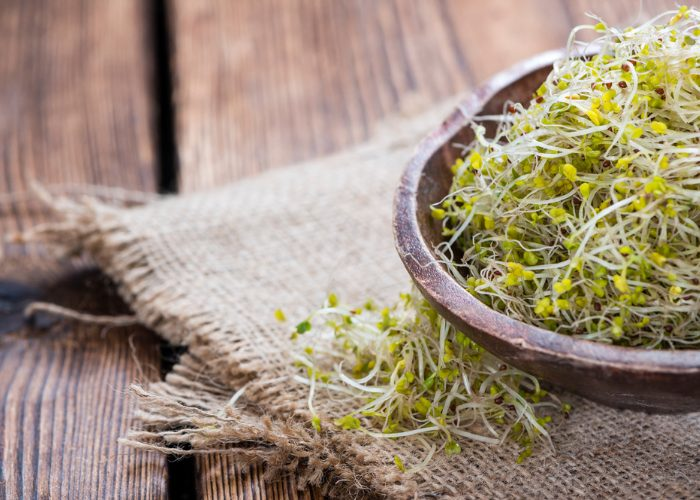 A wooden bowl filled with homemade broccoli sprouts