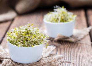 Broccoli sprouts in a small white bowls