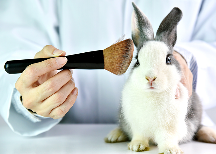 Lab researcher holding a makeup brush to a rabbit's face