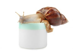 snail on a jar of snail cream