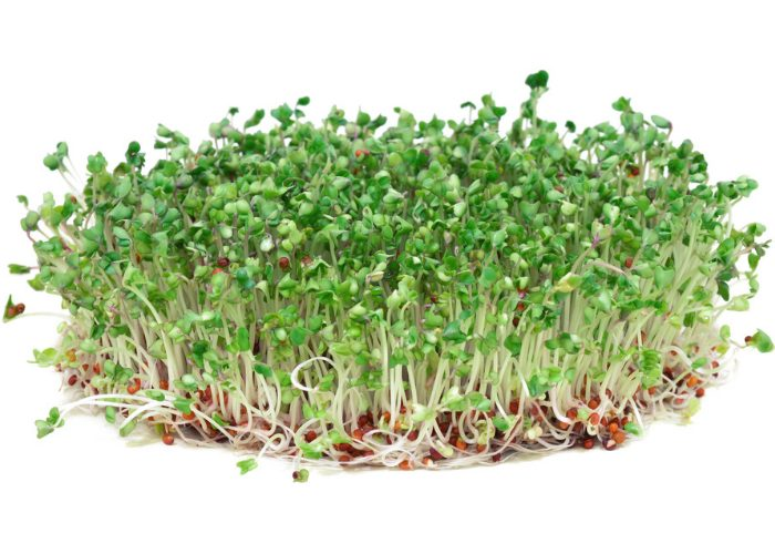 A bunch of broccoli sprouts on a white background