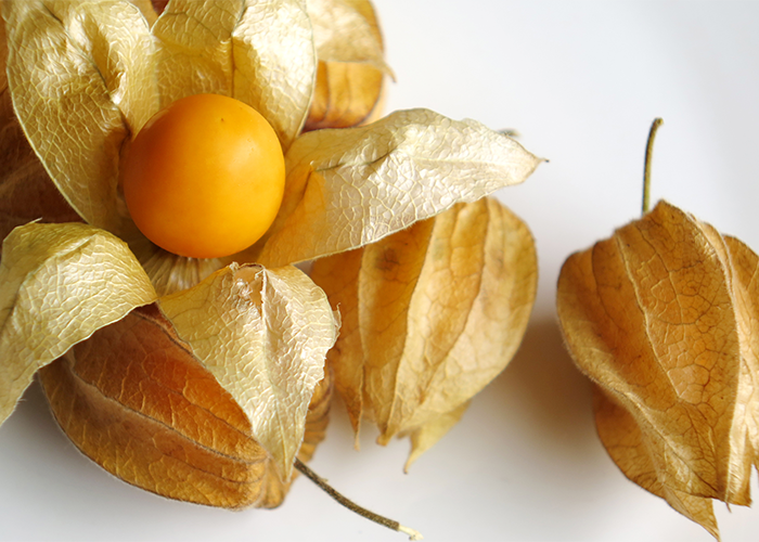 Golden berries with husks on a white table with one open berry laid on top of them.