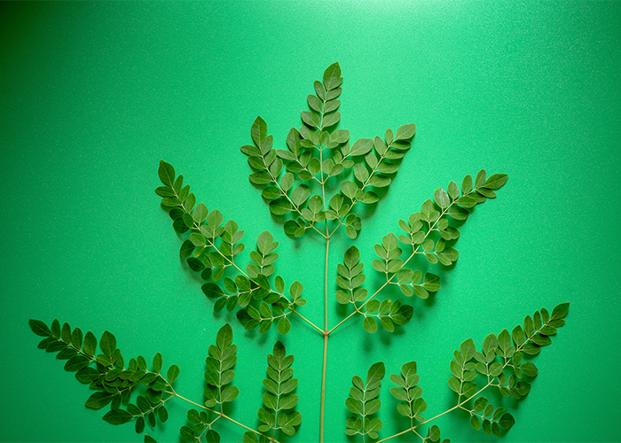 Moringa leaves on a green background