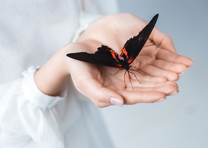 A woman holding a black butterfly with orange detail in the palm of her hands.