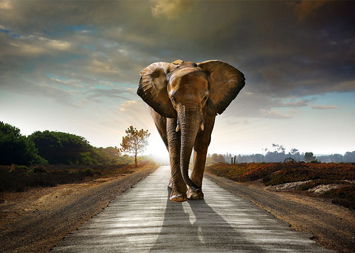 An elephant walking down a path towards the viewer.