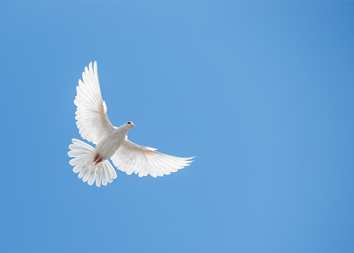 A white dove flying high in the sky.