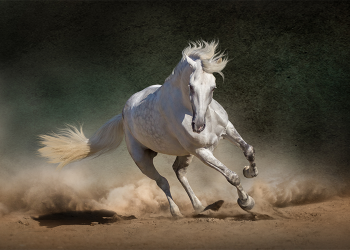 A white horse galloping
