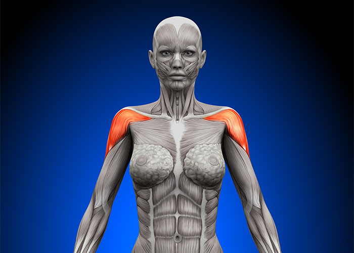 Image of a female anatomy with deltoid muscles highlighted