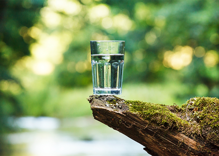 A glass of water balanced on the edge of a piece of wood in a forest