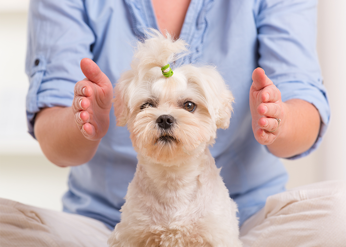 Dog receiving reiki healing from owner
