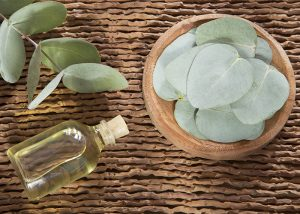 A bottle of eucalyptus and cedarwood blend essential oil next to fresh eucalyptus leaves