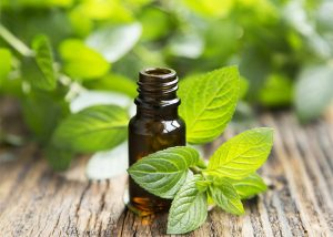 Bottle of anise and peppermint essential oil blend