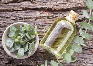 Eucalyptus oil next to freshly cut eucalyptus plant
