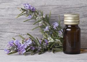 A bottle of rosemary essential oil net to freshly cut rosemary stems