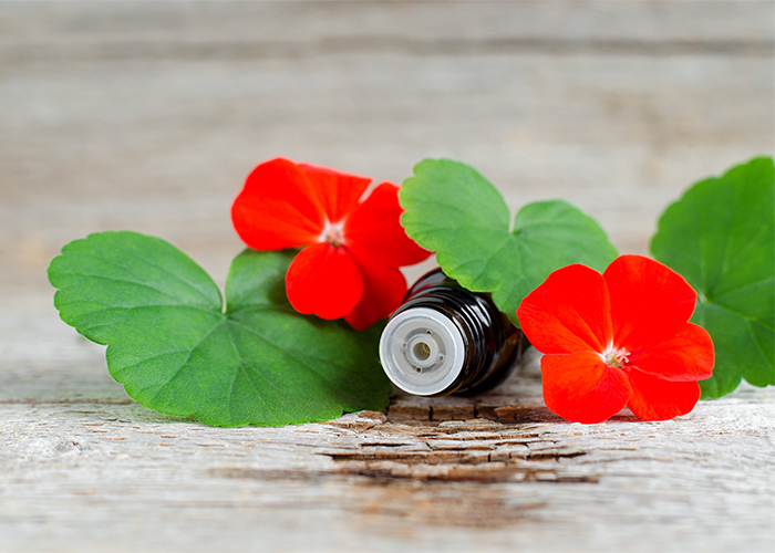 A bottle of geranium essential oil covered by geranium flowers