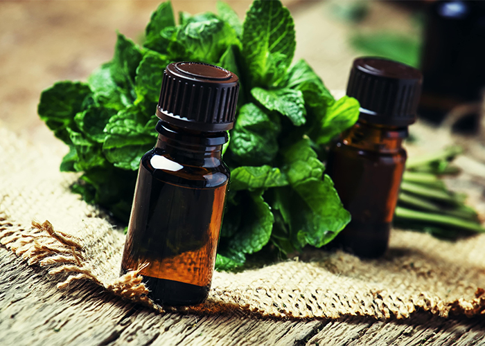 Close-up of two bottles of peppermint oil next to a fresh bunch of peppermint leaves