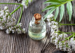 A small bottle of valerian essential oil with a cork stopper surrounded by fresh valerian twigs