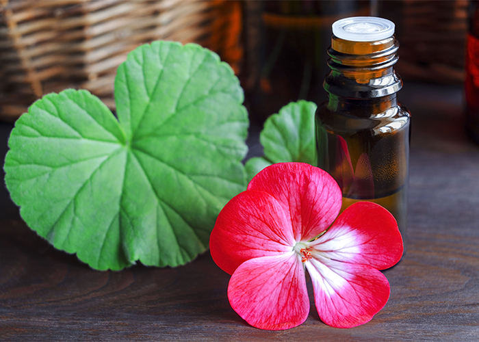 A bottle of geranium essential oil next to a freshly picked geranium flower and a leaf