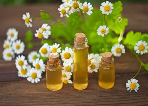 Bottles of chamomile essential oil with chamomile flowers in the background