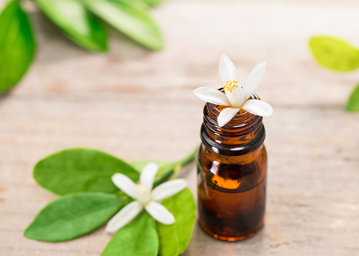 An open bottle of neroli essential oil with a neroli flower in the opening, with freshly cut neroli flowers and leaves in the background