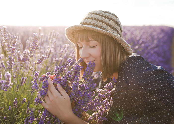 Woman smelling fresh lavenders in a lavender field