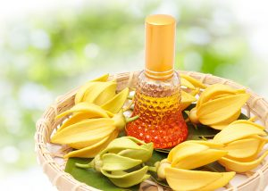 Ylang ylang flowers presented bamboo basket with bottle of essential oil in the middle