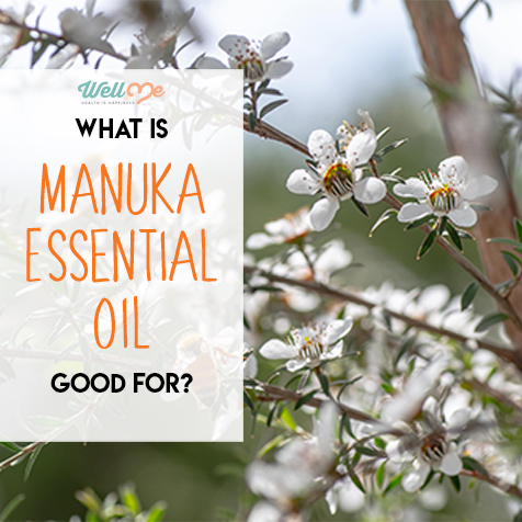 what-is-manuka-essential-oil-good-for-title-card